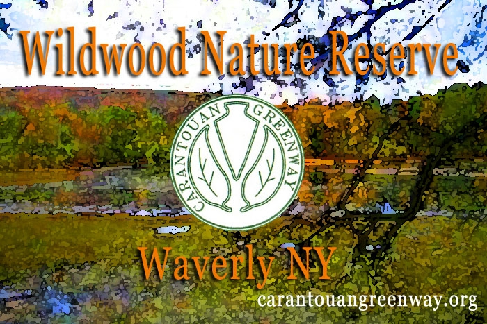 Wildwood Nature Reserve